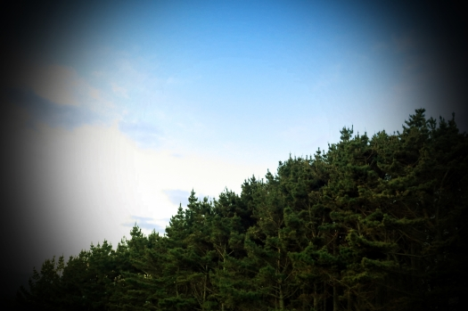 pines pt 3